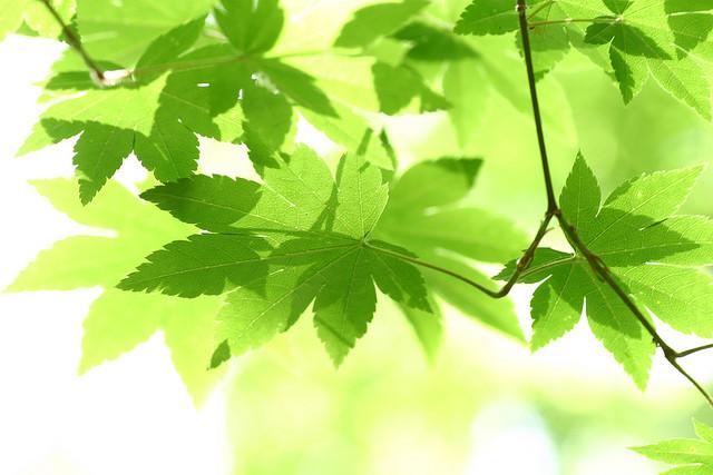 The best leaf window pane